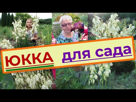 Юкка