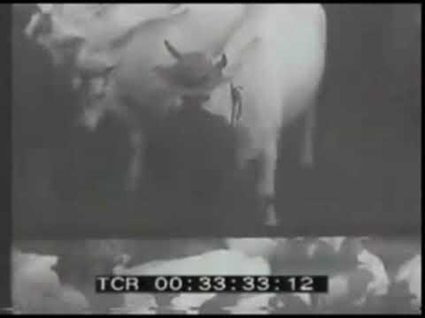 La Fiera di San Martino nel 1929