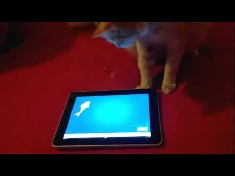 Mačka peca na Ajpodu