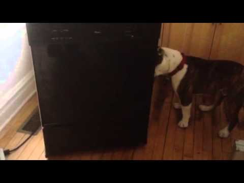 Thumbnail image for 'Video: The Bulldog and the portable dishwasher'