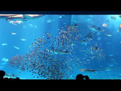 5DMK2 CYURA‐UMI  Aquarium (Okinawa Japan)