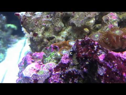 Reef Tank Update Day 120!