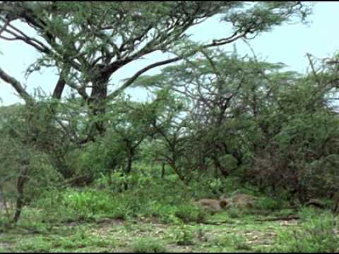 NATURALEZA-FAUNA-FLORA-Africa el Paraiso del Espino-National Geographic-2