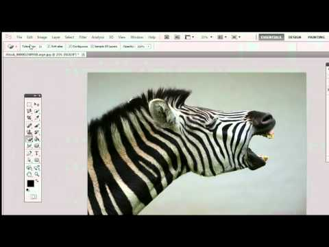 How To Use The Magic Eraser Tool in Adobe Photoshop