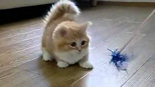 Fluffy Kitten Is Confused