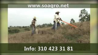 Platanicultura - Asociación Hortifrutícola de Colombia