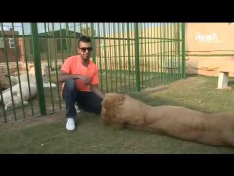 شاهد بالفيديو .. سعودي يعيش بين حيوانات مفترسة في الرياض