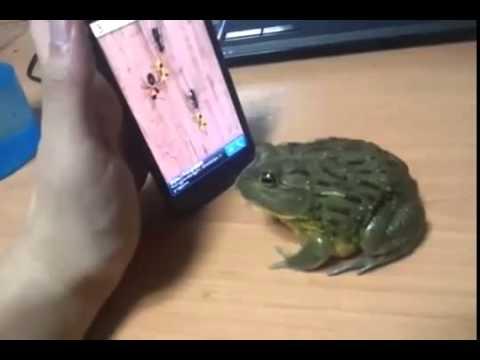 فيديو مضحك ! ضفدعة تلعب بالهاتف و في النهاية .. ؟