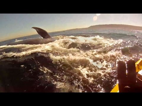 Kayaking with Redondo Beach Blue Whales, with underwater footage  and Lunge feeding GoPro