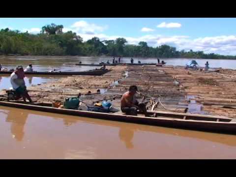 Tala y Comercio de madera en CCNN de la Región Ucayali mayo 2011