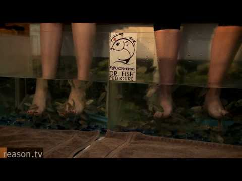 New Hampshire Nannies: Why is the Live Free or Die State Banning Fish Pedicures?