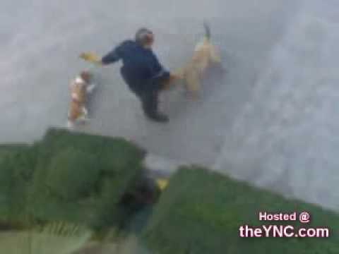 Dog Goes on Attack!   The YNC.com.flv