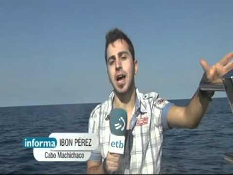 Cetáceos en la costa vasca