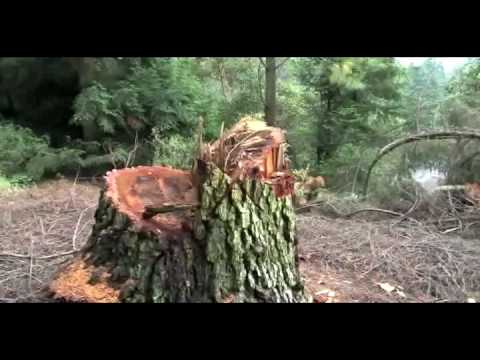 Deforestan La Malinche