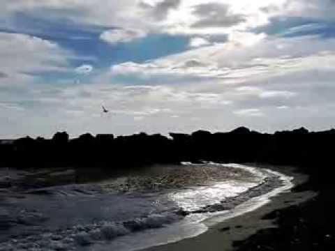 Gabbiani a Haulover Beach - Miami