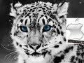 Como descargar e Instalar Mac OS X Snow Leopard 10.6 en un PC   Spanish