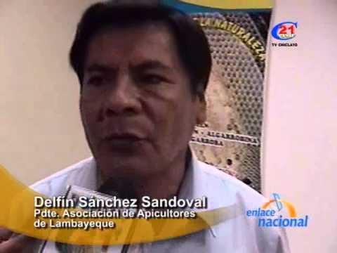 Tala de bosques afecta producción de miel de abeja en Lambayeque