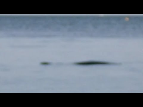 The Loch Ness Monster of Britain CAUGHT ON CAMERA?