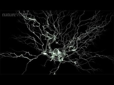 Method of the Year 2010: Optogenetics - by Nature Video