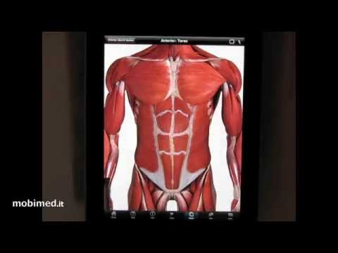 3D4Medical Anatomy Atlas Review - iPad edition - mobimed.it