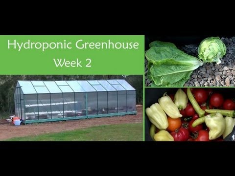 Hydroponic Greenhouse Setup - Week 2