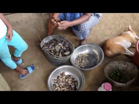 CONGO   MEAT (HOW TO PREPARE SNAILS)