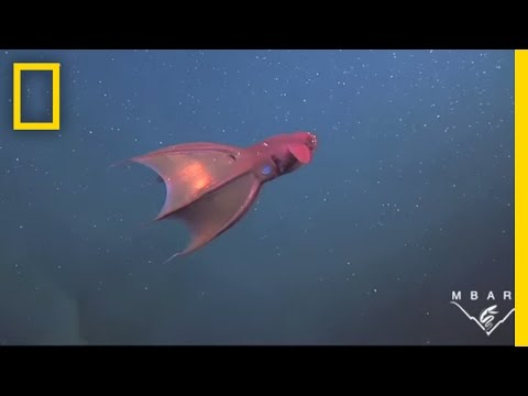 Vampire Squid Turns Itself Inside Out