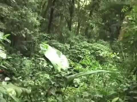 Reino vegetal en Costa Rica parte dos. Planeta Interno temporada 3 2010