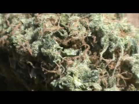 The CCC - Episode 5: Headband Strain Review / Granny Purps Edible Reviews