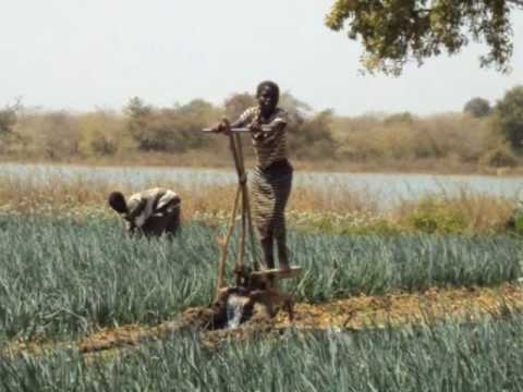 Agricoltura Sostenibile in Burkina Faso: Cooperazione a scuola