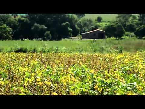 Las manos de Monsanto en el Paraguay.