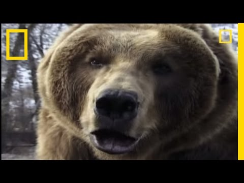 How to Survive a Grizzly Attack