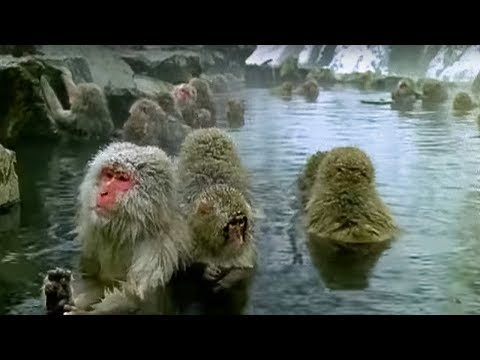 Monkey Health Spa - Cousins - BBC