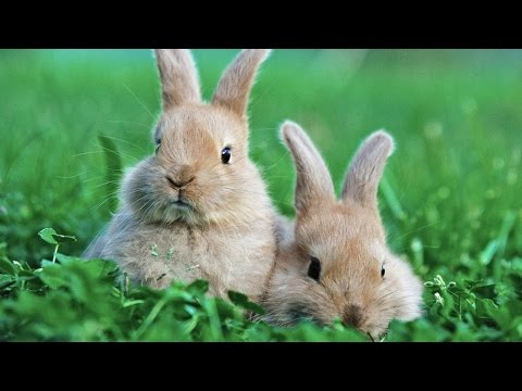 Gov't Uses Bunnies To Fight Against Marijuana Legalization