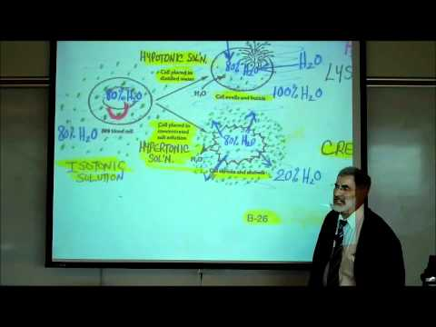 PHYSIOLOGY; DIFFUSION, OSMOSIS & ACTIVE X-PORT ACROSS CELL MEMBRANES by Professor Fink