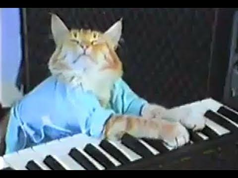 Charlie Schmidt-s Keyboard Cat! - THE ORIGINAL!