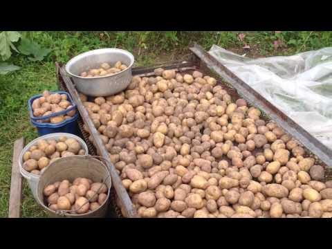 Купить семенной картофель