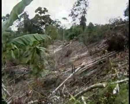 Universidad Campesina Amazónica de Sucumbíos 1