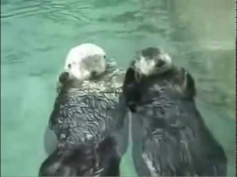 Otter holding hands, so cute! Song.