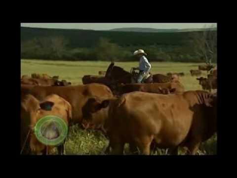Fazenda Santa Silvéria - Agro First Brasil