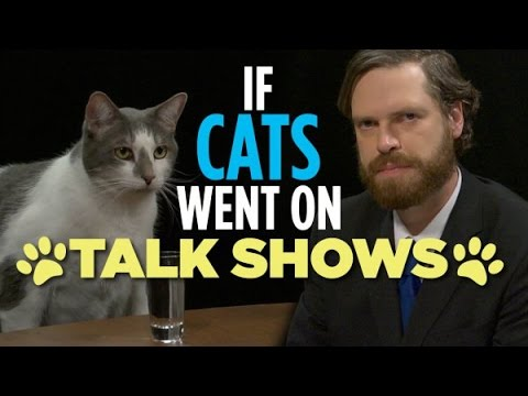 If Cats Went On Talk Shows