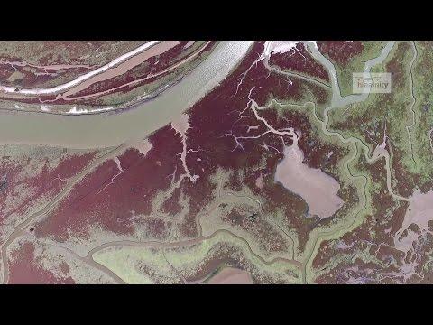 Το μαγευτικό Δέλτα του Αξιού από ψηλά | Axios River Delta Drone Greece - UCyly0SkVXoQ3nHbKj1QignA