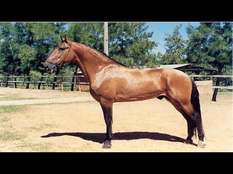 Curso Como Comprar Cavalos - Cursos CPT