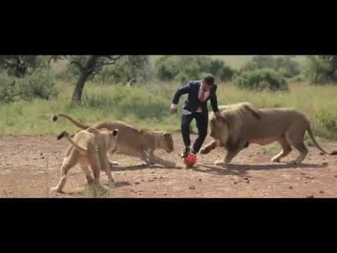 A world's first: Playing football with wild lions FullHD