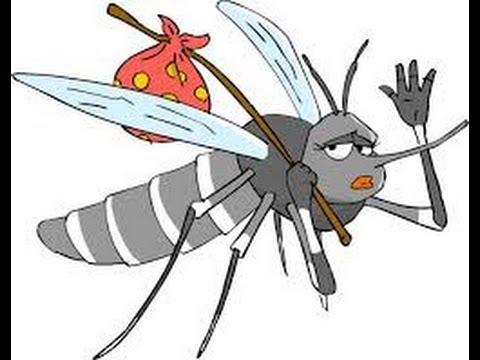 Oli essenziali; Lozione anti-zanzare fai da te.