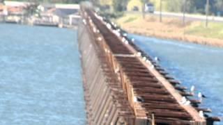 Ponte de Ferro em Cabeçuda - Laguna Santa Catarina