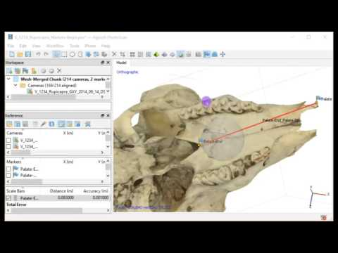 15-Photogrammetry 3D Fossils Adding Measurments to the 3D Model