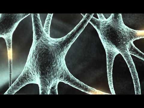 Formação de Professores - Neurociência e Educação