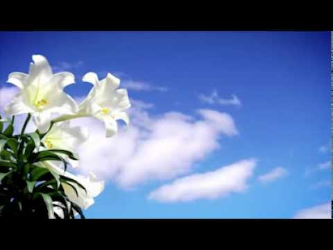Easter Lily Sky   Motion Worship    Video Loops, Countdowns,   Moving Backgrounds for the Christian Church