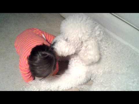 Amelia licking Lola